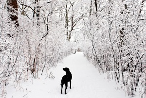 Nemo_on_snowy_path