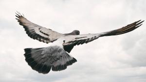 Big_bird2